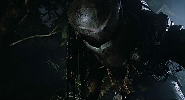 predador-11